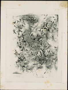 William Henry Fox Talbot  (British, 1800–1877) Dandelion Seeds    1858 or later. Photogravure (photoglyphic engraving from a copper plate).