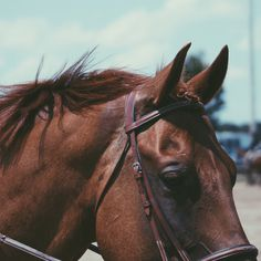 "willslideforchocolate: "" I love this horse so much """