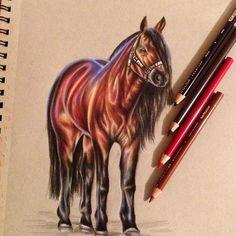 1,131 отметок «Нравится», 17 комментариев — Estefani Barbosa (@bar428) в Instagram: « finished #drawing #illustration #horse #prismacolor #coloredpencil »