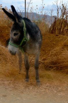 En daar staat ie.......vlakbij ons huis. Komt er ooit nog een ezel op ons erf te staan?