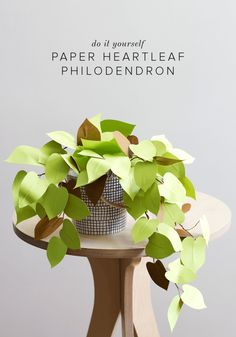 My bedroom window, which faces a fire escape and an alley, just does not provide that kind of light. I have long needed a touch of green to brighten the space… Welcome, paper heart leaf!