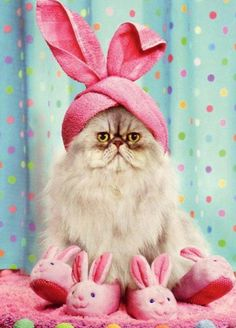 Who doesn't love a cat dressed up in a pink bunny costume? Except for maybe the cat.