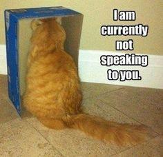 Red Cat!