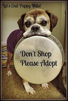 Don't Shop Please Adopt❤️