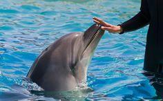Did Incoming Georgia Aquarium Vice President Abuse Dolphins in Spain?