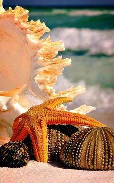 Love sea shells! ❤️