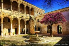 Judas tree in the courtyard of the Palacio de los Ribera, Bornos, Spain, by Stephen Candler