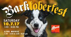 Live Music Bar, Humane Society, Thrifting, Adoption, Store, Happy, Animals, Foster Care Adoption, Animales