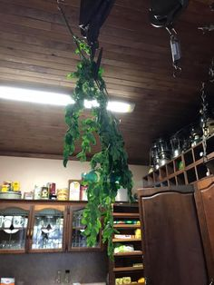 Moringa Jelly with Pear - Africa Moringa Hub Blog Moringa Leaves, Moringa Powder, Cooking Competition, Dry Leaf, Jelly, Pear, Africa, Recipe, Blog