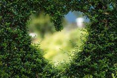 """Résumé de ma fanfiction sur Blindspot """"Laisser parler son cœur"""": Et si Reade entendait la conversation de Tasha et Patterson à l'hôpital. Et s'il était incapable de faire comme s'il ne savait pas. Et s'il ouvrait enfin les yeux. Ou ce que j'aurais aimé voir à la fin du 3×14. #histoiredamour #blindspot #repata Renewable Energy, Solar Energy, Solar Power, Wind Power, Organic Gardening, Gardening Tips, Vegetable Gardening, Arizona Gardening, Gardening Services"""