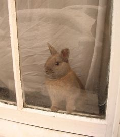 how much is that bunny in the window (not a kitty but still cute!)