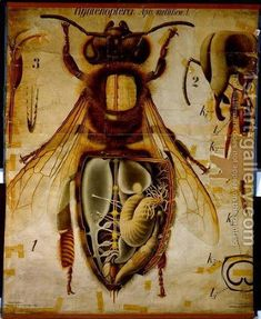 Anatomy of the Honey Bee, Pfurtschellers Zoological Wall Chart by Paul Pfurtscheller - Reproduction Oil Painting I Love Bees, Birds And The Bees, Bees And Wasps, Traditional Artwork, Bee Art, Busy Bee, Save The Bees, Bee Happy, Bees Knees