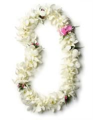 There's nothing like real Hawaiian Wedding Leis to set a romantic mood. Check out our variety of Wedding Lei options. All our leis can be used in weddings. Centerpiece Wedding Flower Arrangements, Tropical Floral Arrangements, Maui Weddings, Hawaii Wedding, Orchid Lei, Hawaiian Flowers, Hawaiian Leis, Flower Lei, Flower Ideas