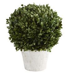 Preserved Boxwood Short Topiary