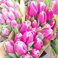 Pink Tulips <3 Hurry up spring