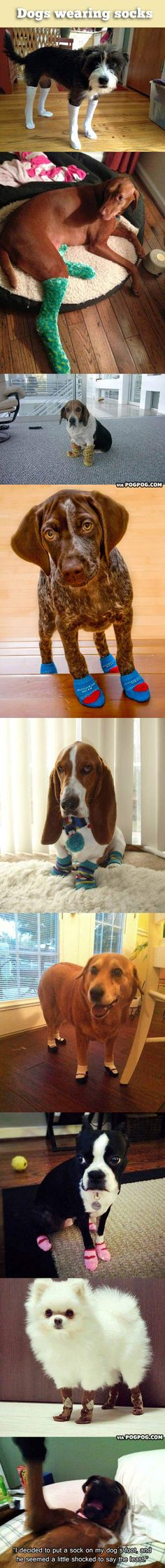 Dogs wearing socks