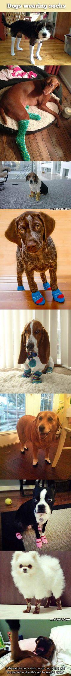 Dogs wearing socks