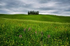 waiting for the Tuscan spring to come (Michael Bolognesi Photography)
