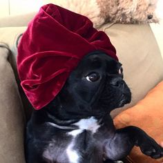 Lady Gaga's dog is on social media, and her posts are incredible. See the best of them.