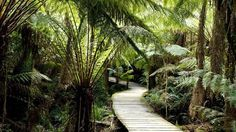 Great Otway National Park, Great Ocean Road, Victoria, Australia
