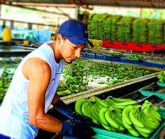 #bananapacking