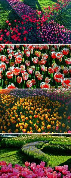 Istanbul Tulip Festival in Emirgan Park.