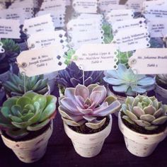 how to make succulent wedding favors