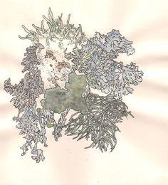 Lichen illustration.