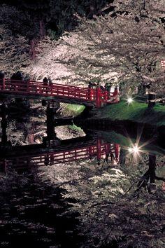 Cherry trees at night in Hirosaki, Aomori, Japan