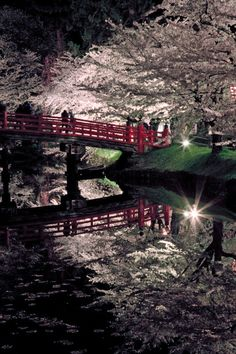 Cherry trees at night in Hirosaki, Aomori, Japan
