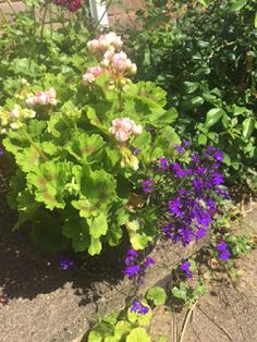 the blackberry garden: The 1960s Project