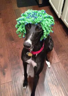 Lexi is wishing everyone the luck of the Irish today!  #irish #greyhounds