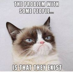 This article lists out 10 Grumpy Cat memes that will make your day. This article also tells you the things that you did not know about Grumpy Cat. Grumpy Cat Quotes, Funny Grumpy Cat Memes, Funny Animal Jokes, Cute Funny Animals, Funny Animal Pictures, Animal Memes, Funny Cats, Funny Memes, Funny Cat Quotes