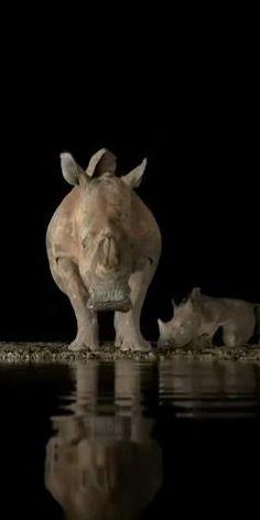 Wild Animals, Animals And Pets, Garden Sculpture, Lion Sculpture, Wildlife Safari, Rhinoceros, Hippopotamus, Animals Beautiful, Black Backgrounds