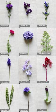 Flower options