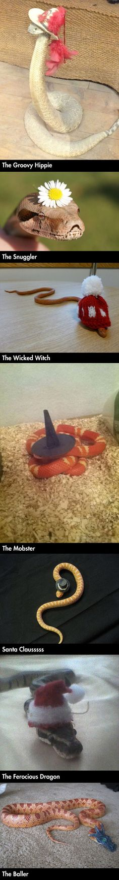 Some more adorable snakes in hats to brighten your day!!!