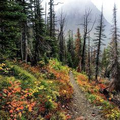 ***Hiking in the fall (Glacier National Park, Montana) by Glacier Guides & Montana Raft (@glacierguidesmontanaraft) on Instagram cr.c.af.