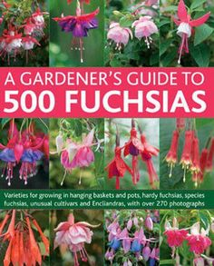 A Gardener's Guide to 500 Fuchsias: Varieties for Growing in Hanging Baskets and Pots, Hardy Fuschias, Species, Unusual Cultivars and Encliandras, with Over 270 Photographs Shade Garden, Garden Plants, Fuchsia Plant, Hanging Flower Baskets, Hanging Plant, Unusual Plants, Plantar, Outdoor Plants, Amazing Flowers