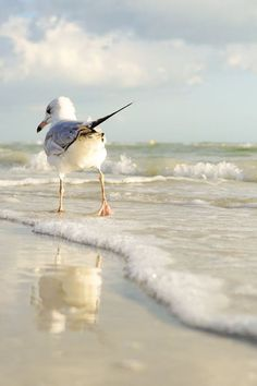 le sentiment de la mouette ⚓ photo by tina nord (seascape marine beach) Beautiful Birds, Animals Beautiful, Cute Animals, Animals Sea, Beautiful Creatures, Beautiful Images, Beautiful Beach, Beach Art, Ocean Beach