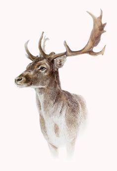 Painting Snow, Painting & Drawing, Watercolor Paintings, Animal Paintings, Animal Drawings, Deer Drawing, Deer Pictures, Deer Art, Wildlife Art