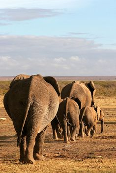 Elephants at Amboseli National Park, Kenya - photo by , via Flickr
