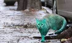 Green cat. The stray cat have been sleeping in a bag with powdered paint.