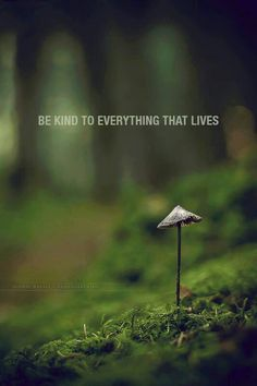 Be kind to everything that lives.