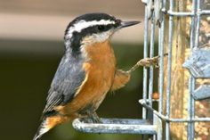 Bird Watching: How to Cultivate a Family Hobby  http://www.hsclassroom.net/2012/06/bird-watching-how-to-cultivate-a-family-hobby/#