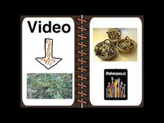 BookCreator - mushrooms. Book with spiral binding. Kids with special needs. - YouTube