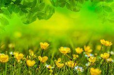 Frühling, Hintergrund, Blume, Feld, Wiese, Ostern, Grün