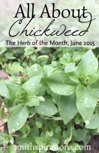 All About Chickweed, the Herb of the Month for June 2015