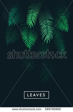 Vector leaves. Flora. Tree branch. Foliage green. Abstract vertical nature background. Jungle. Dark forest. Modern design template. Botanical.