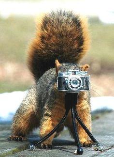 splodefromcute: SQUIRRELS! (photographer squirrel)