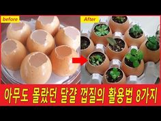 아무도 몰랐던 달걀껍질 활용법 8가지 - YouTube Diy And Crafts, Pudding, Breakfast, Desserts, Food, Decor, Morning Coffee, Tailgate Desserts, Deserts